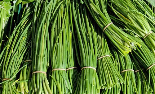 chives herbs culinary herbs