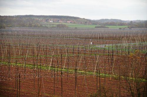 chmelnice harvested polnohospodářství