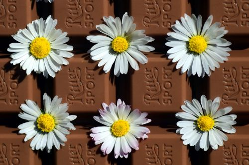 chocolate,benefit from,delicious,nibble,sweet,gift,love,spring,mother's day,floral,daisy,white,yellow,brown,calories,sin,diet,eat,dessert,beautiful,sticky,luck