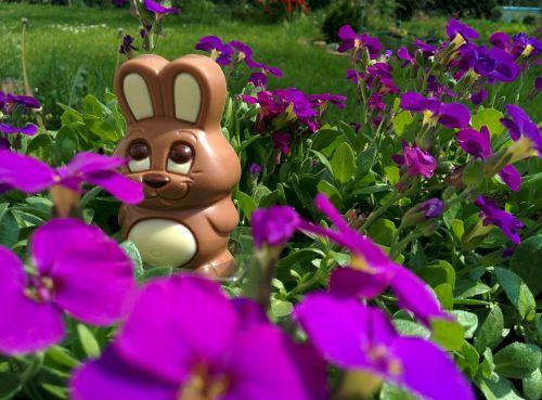 chocolate bunny easter bunny easter