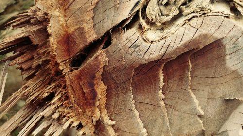 chopped cracked log