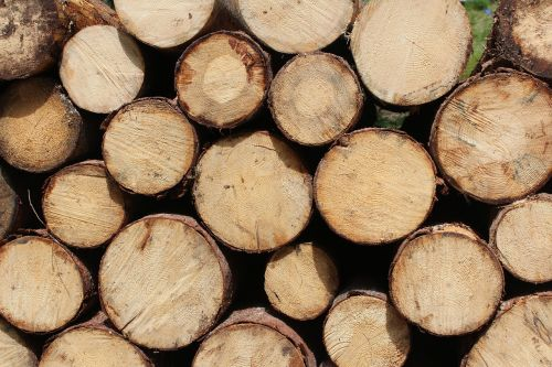 chopped wood firewoods logs