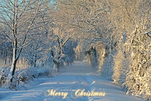 christmas christmas card christmas greeting