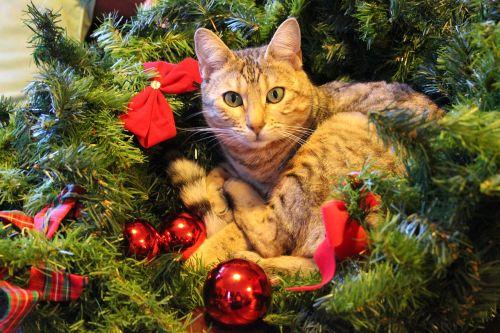 christmas cat festive