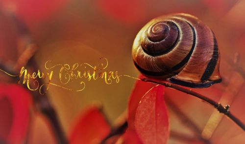 christmas snail meals