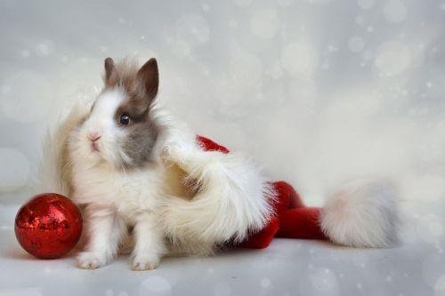 christmas dwarf bunny cap