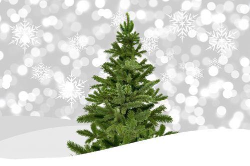 christmas christmas tree bokeh