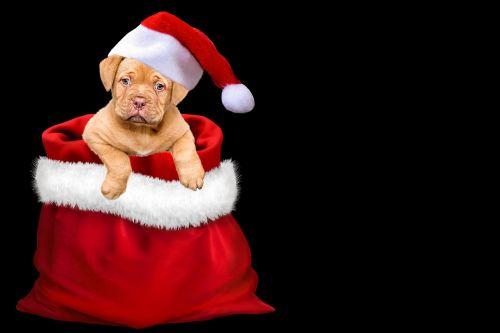 christmas gifts dog