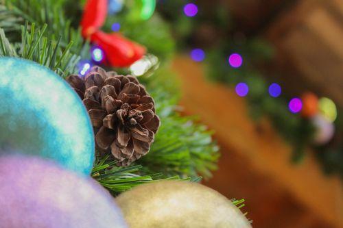 christmas december pine