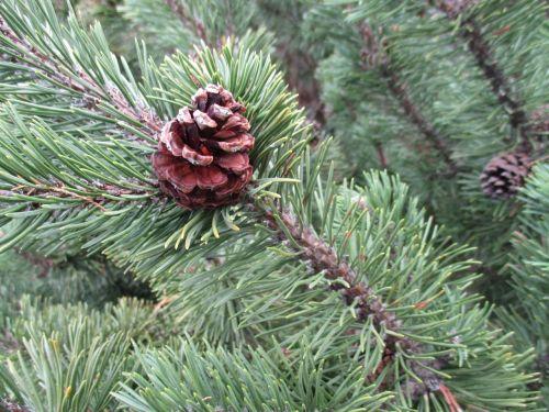 christmas background advent wreath advent calendar