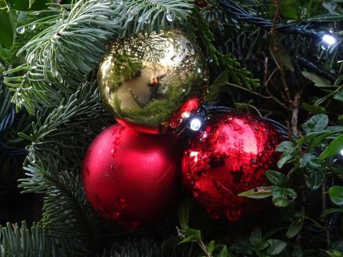 Christmas Baubles In Morning Dew