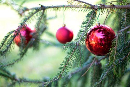 christmas bulbs red pine tree