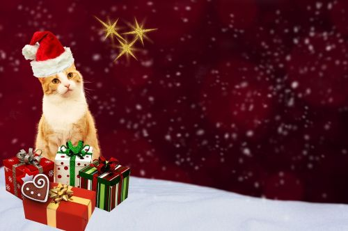 Kalėdinis atvirukas,katė,dovanos,atvirukas,raudona,auksas,šventinis,Kalėdų motyvas,Kalėdos,atvirukas,pagamintas,žiema,sniegas