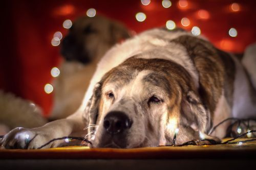 christmas dog dog lichterkette