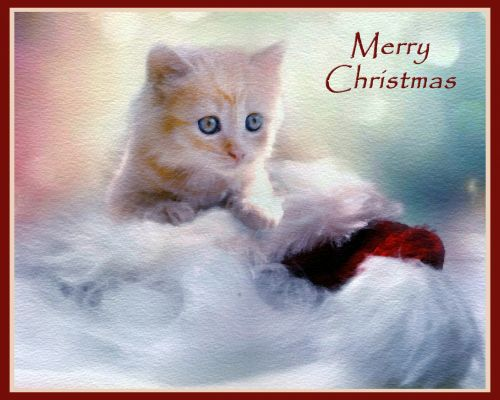 Christmas Kitten Greetings Card