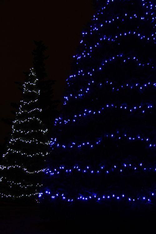 Kalėdos, žibintai, medžiai, mėlynas, balta, linijos, Kalėdų žiburiai medžiai
