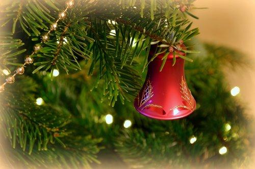 christmas picture  christmas motif  christmas tree