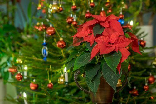 christmas pictureschristmas themeschristmas ballschristmas flowerfree photosfree