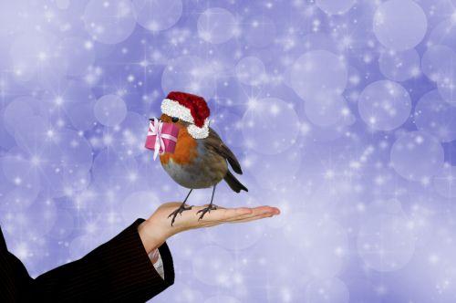 Christmas Robin With Gift
