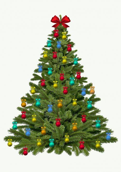 christmas tree christmas fir