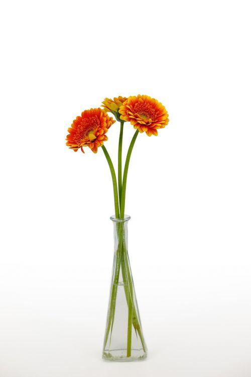 chrysanthemum bouquet flowers