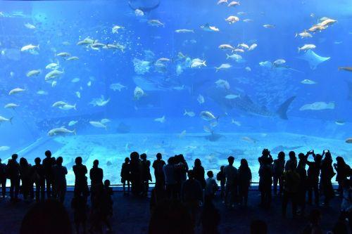churaumi aquarium aquarium water tank