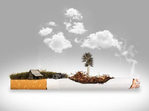 cigarette removal plantation