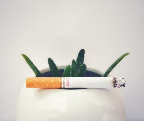 cigarettes  smoking  plant
