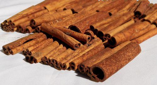 cinnamon spice bark
