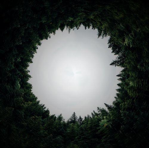circular forest dimension