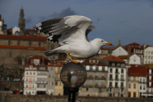 city seagull landscape