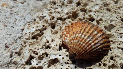 clam stone stones