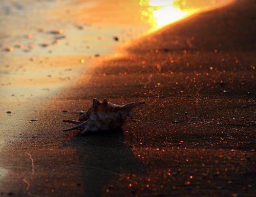 clam sand sun