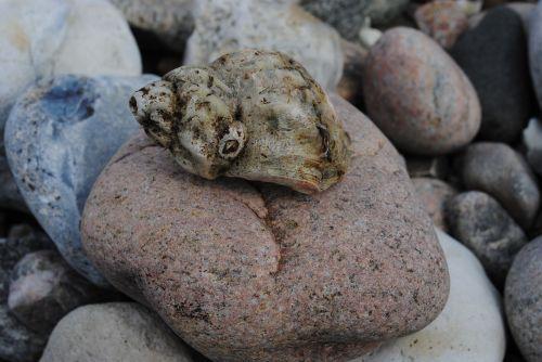 clam beach must