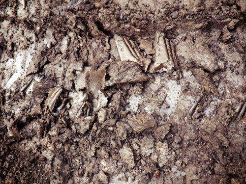 Clammy Footprint