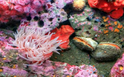 Clams, Sea Anenome And Coral