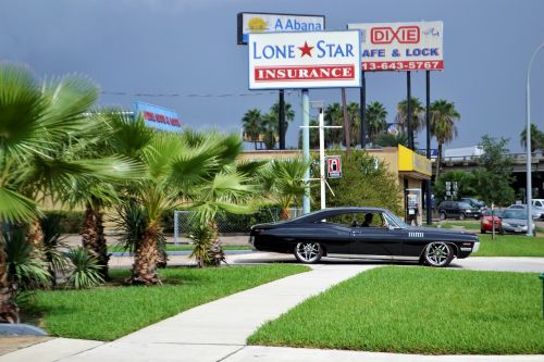 classic car and palm trees ford mustang
