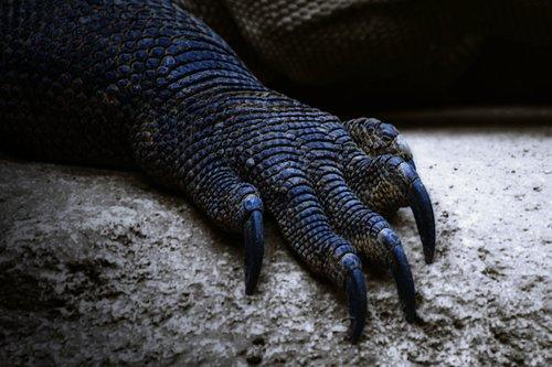 claw  dragon  creature