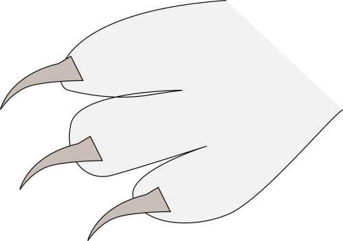 claws fingers paw