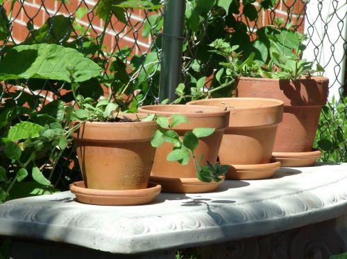 molis,puodai,keramika,keramika,amatų,keramikos gaminiai,kultūra,tradicinis,augalas,vazos,figūra,sodas,dekoratyvinis,Gelės vazonas,puodai,ruda,terakota,sodininkystė,darbas,žalias,betonas,stendas