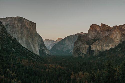 cliff conifers dawn