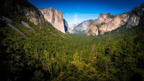 cliffs conifer daylight