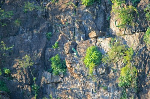 Cliffs With Some Vegetation