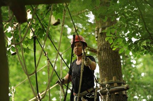 climb  climbing forest  climbing park