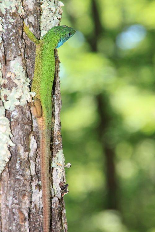 climbing forest green