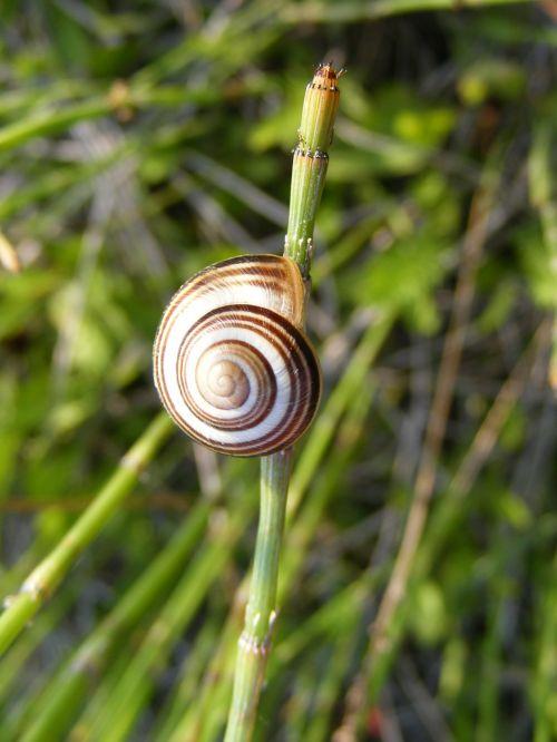 climbing close-up coiled