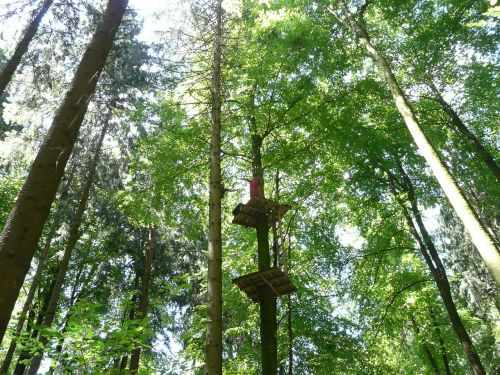 climbing forest high ropes course climb