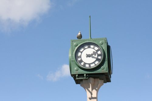 clock seabird sky