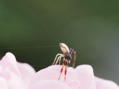Uždaryti,makro,vabzdžių makro,voratinklis,voras,sodas,vabzdys,fauna