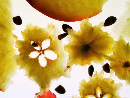 Close Up Of Apple Eaten